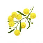 Acacia Bio - LOG.82.012